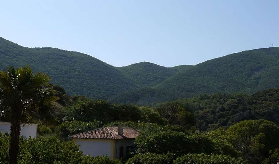 a photo of green hills