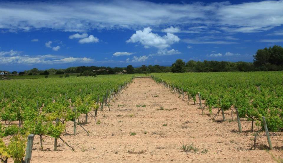 Vineyards & Estates Ibiza