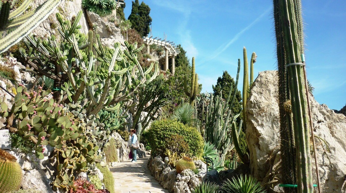 succulents and cactus in the exotic garden of Eze