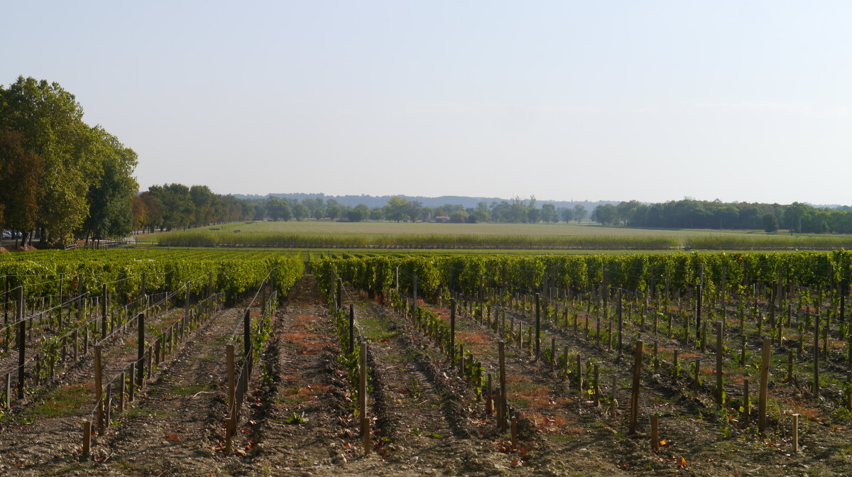 vineyards and landscape of the medoc region of gironde