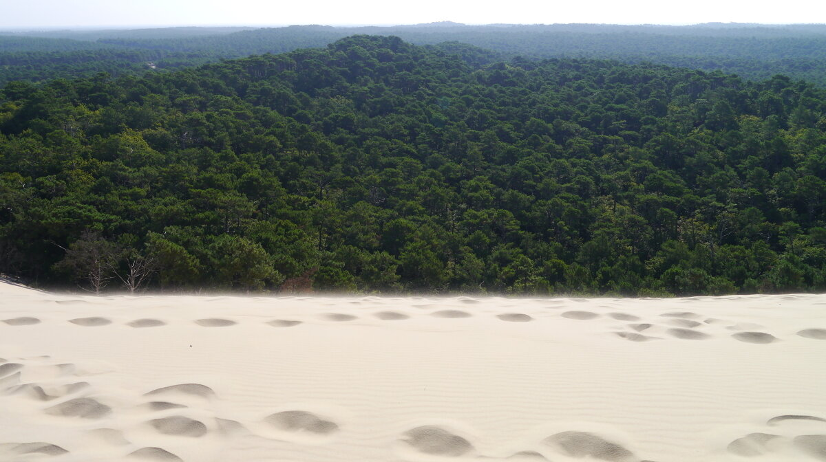 Lush forest and sand dunes on the coast of the girdonde