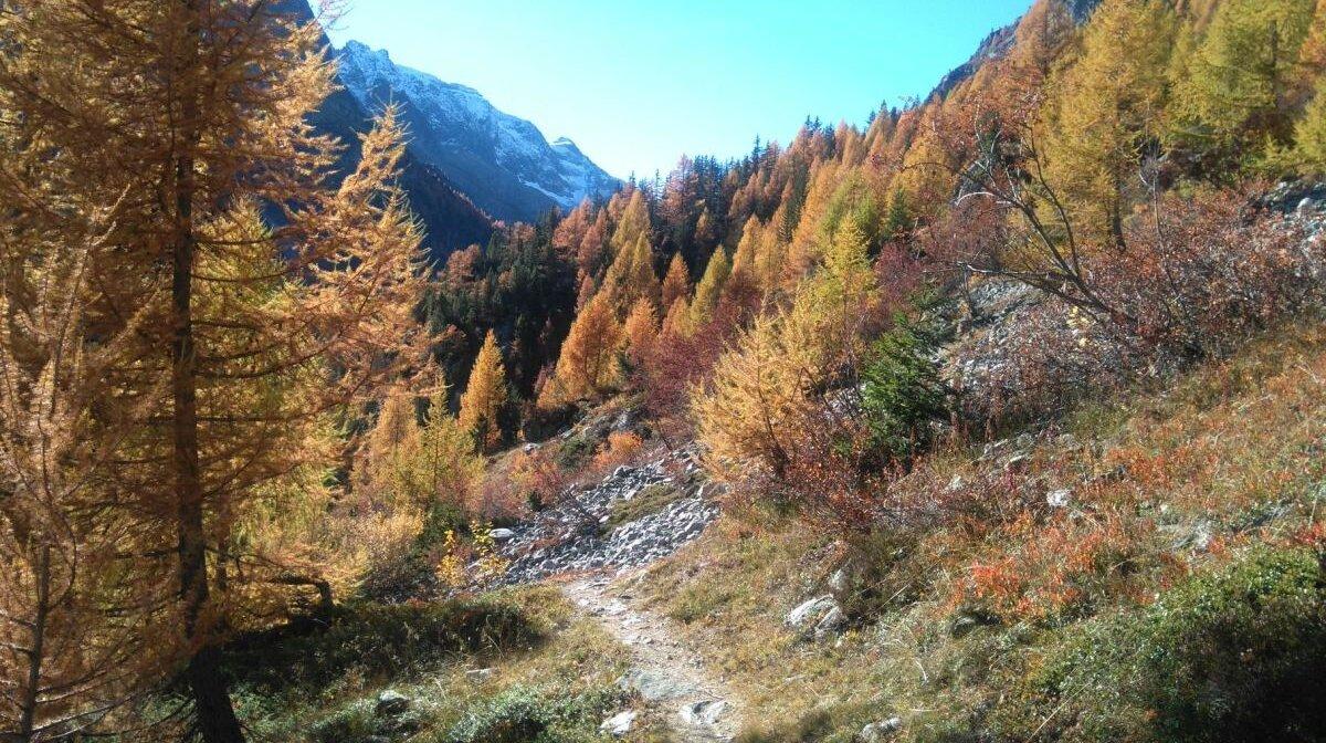 autumn trees in Chamonix