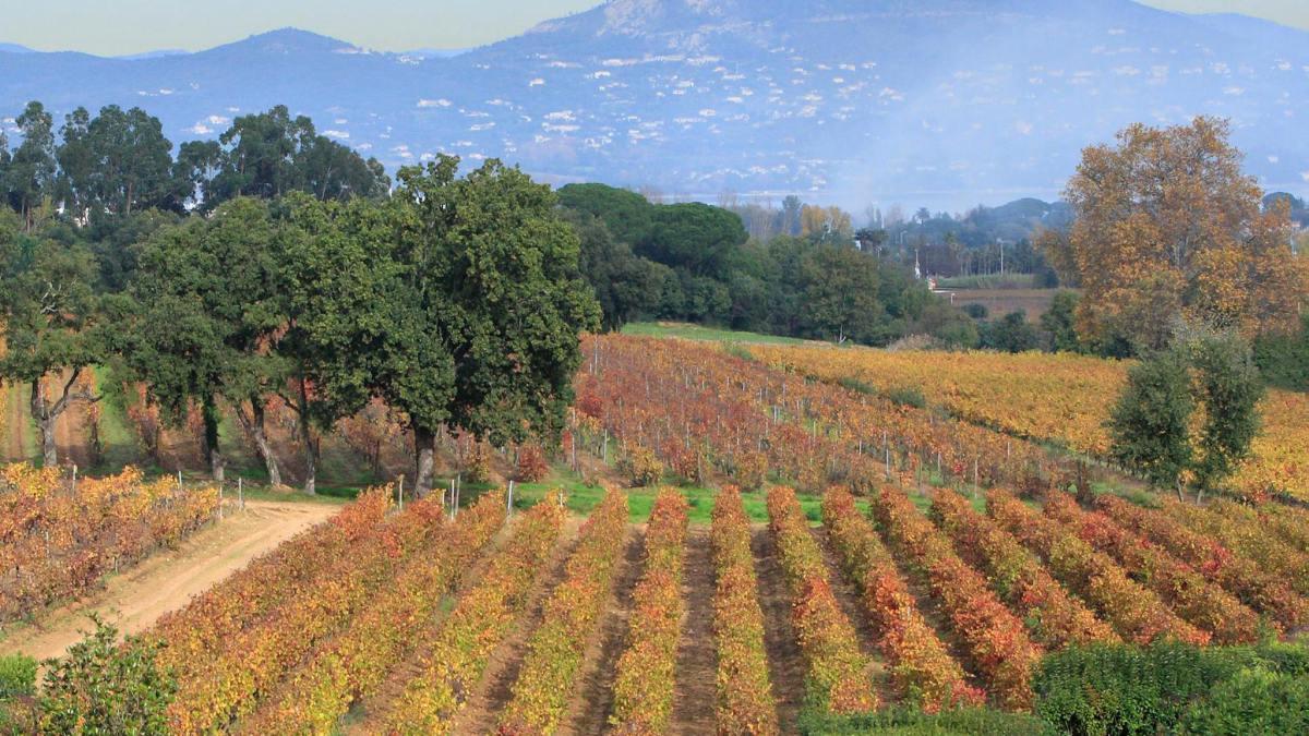 Vineyards & Estates Saint-Tropez