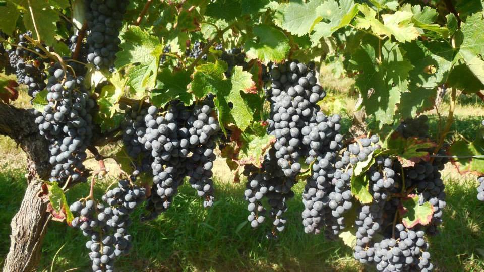 Vineyards & Estates Dordogne
