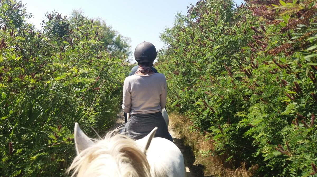 horses following a trail