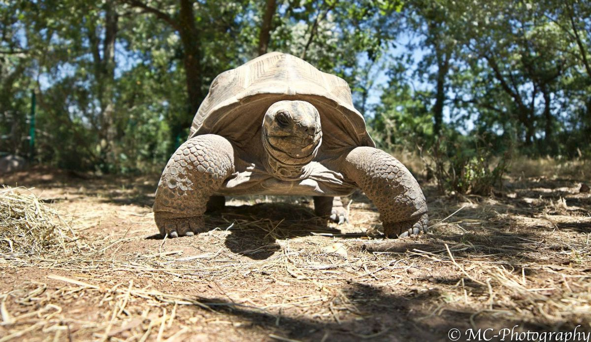 Tortoise park and nature reserve in Provence
