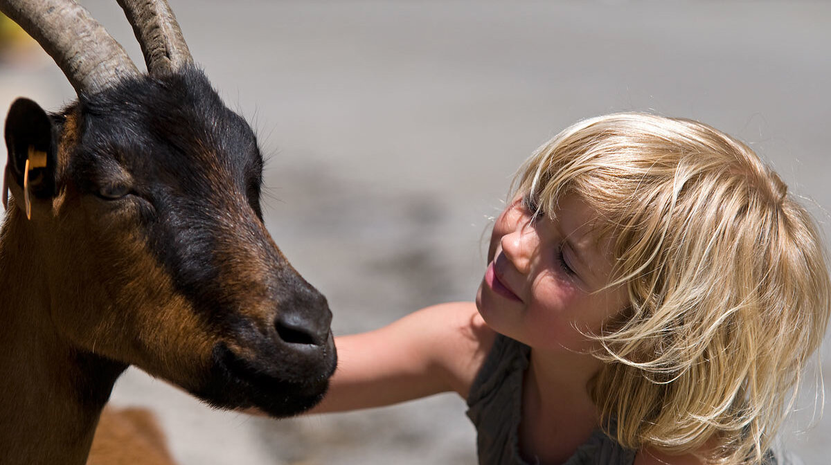 a girl petting a goat