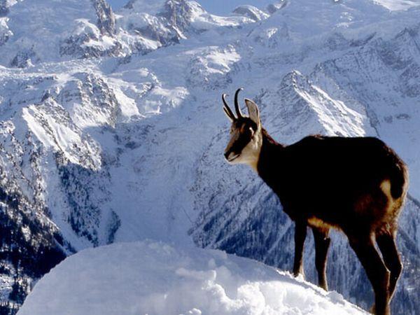 Nature Reserves & Parks Chamonix