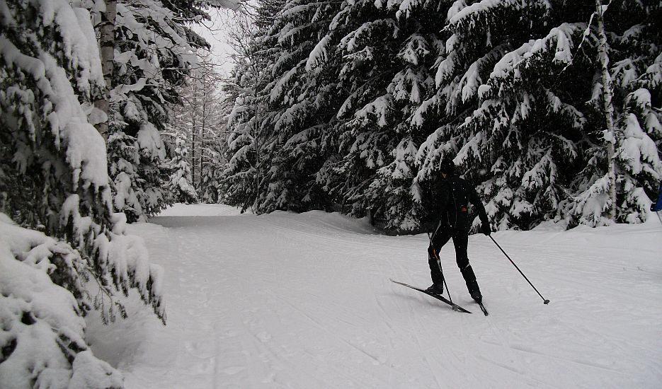 An image of a cross country skier ski de fond in Chamonix Bois de Bouchet